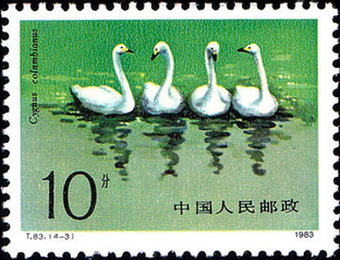 Swan in Chinese Stamp